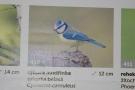 http://ccv.volny-cas.cz/uploads/obrazky/ptaci-jizni-moravy---vystava/132603130812dscn1028.jpg