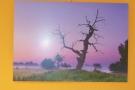 http://ccv.volny-cas.cz/uploads/obrazky/vystava-strom-soliter-2015/135803150910dscn3808.jpg